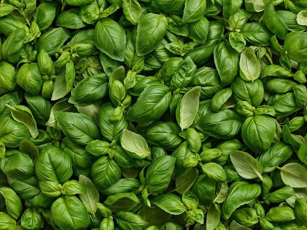 Packaging shot of fresh basil for Marks and Spencer's packaging. This was for the Summer Food On The Move range.